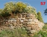 57_wild-flowers-in-portinatx-ibiza