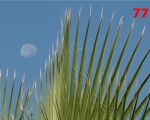 77_fan-palm-in-atlas-mountains-morocco