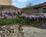 06_wisteria-in-derelict-piggery-gourge
