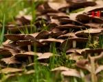 14_mushroom-hotel