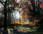 19_woodland-near-vausseroux