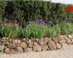 23_irises-in-the-garden