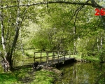 26_alfie-on-the-bridge