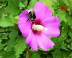 29_busy-bee-in-my-garden