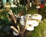 32_mushrooms-in-la-villede